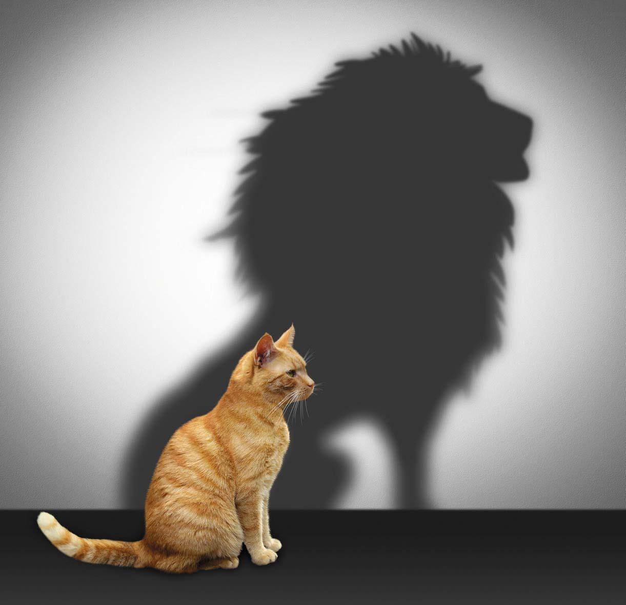 La montée en compétences, essentielle dans le management en franchise ?